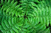Travel photography:Fern from above, New Zealand