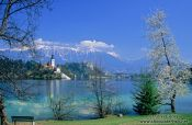 Travel photography:View of island and Bled Castle with Blejsko jezero (Bled lake) and the Slovenian Alps in the background, Slovenia