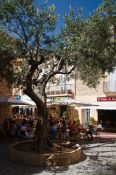 Travel photography:Olive tree in Begur, Spain