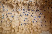 Travel photography:Arabesque ceiling with muqarnas in an alcove of the Nazrin palace in the Granada Alhambra, Spain