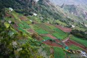 Travel photography:Terraces in Anaga Rural Park on Tenerife, Spain