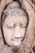 Travel photography:Overgrown Buddha head at a temple in Ayutthaya, Thailand