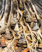 Travel photography:Small Buddhas left at the base of a large tree in Sukhothai, Thailand