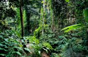 Travel photography:Forest near Chiang Rai, Thailand