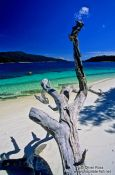 Travel photography:Dead tree on Ko Rawi beach, Thailand