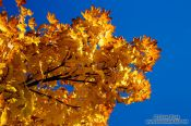 Travel photography:Trees in autumn colour, United Kingdom