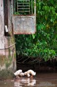Travel photography:Ducks on the Mekong, Vietnam