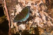 Travel photography:Butterfly near Sapa, Vietnam