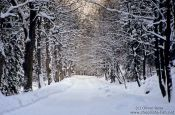 Travel photography:Path in wintery landscape, Germany