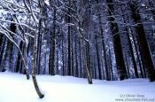 Travel photography:Frozen forest, Germany
